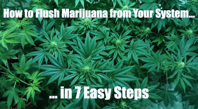 cover photo marijuana out of your system