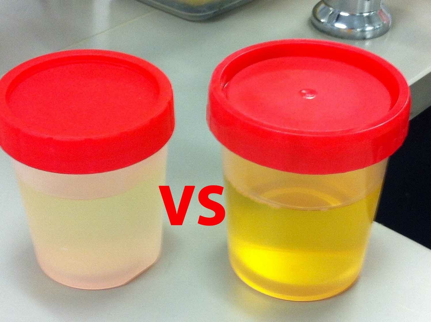 real and synthetic urine face off