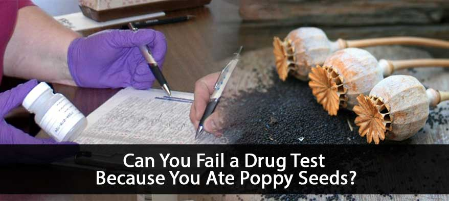 Poppy Seeds Cover Image